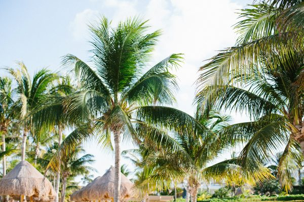 Palm trees, palapas, and ocean waves. #DestinationWedding